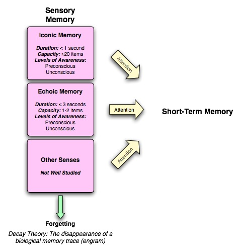 capacity duration of short term memory The assumption that the contents of short-term or working memory decay over time and the duration of each working memory capacity is correlated with learning.